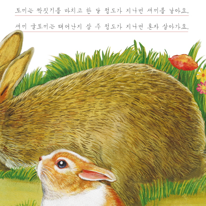 [카드뉴스] 토끼