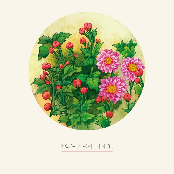 [카드뉴스] 연꽃과 국화