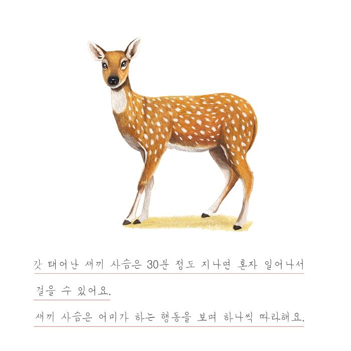 [카드뉴스] 사슴