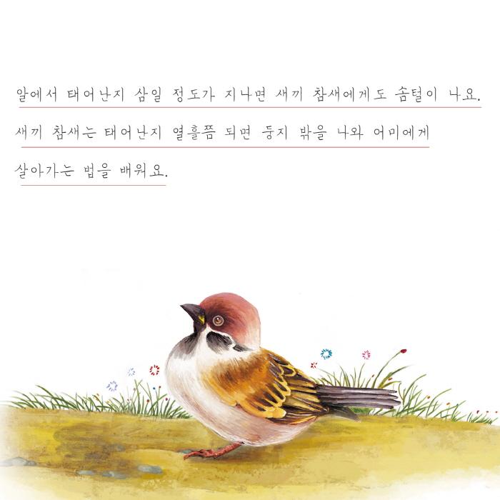 [카드뉴스] 참새