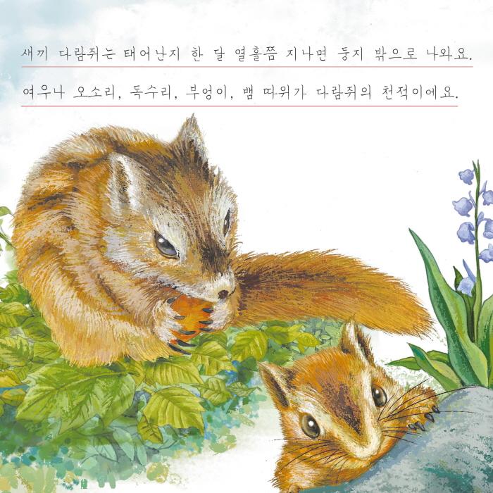 [카드뉴스] 다람쥐