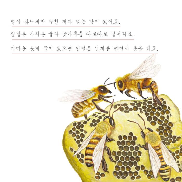 [카드뉴스] 꿀벌