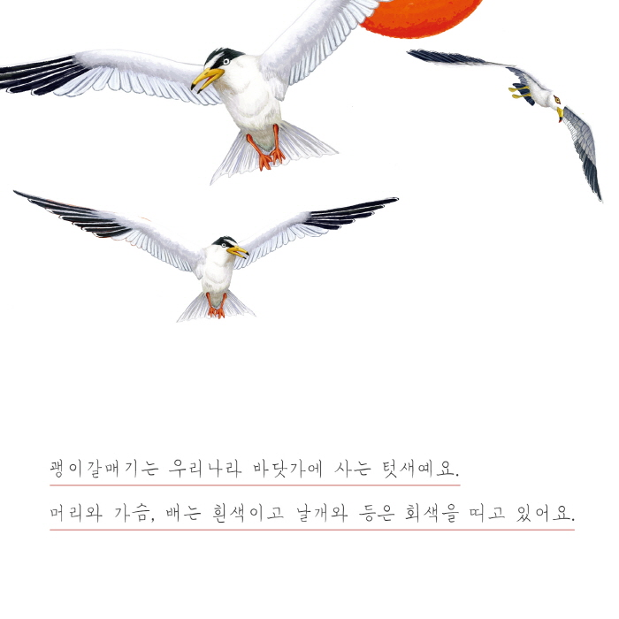 [카드뉴스] 갈매기