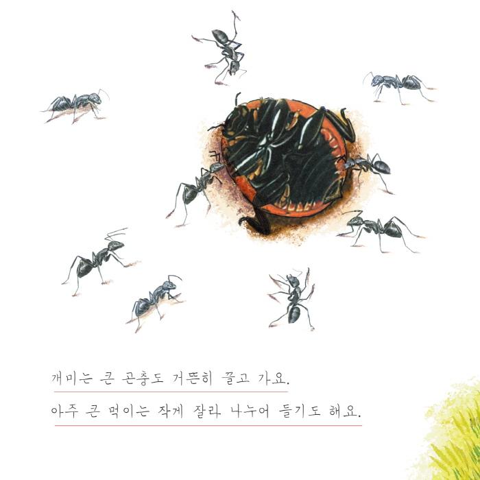 [카드뉴스] 개미