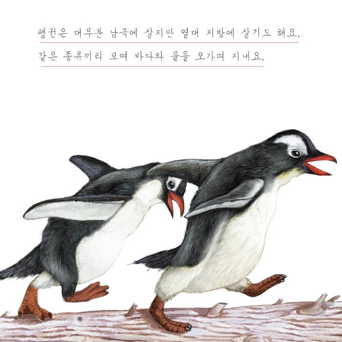 [카드뉴스] 펭귄