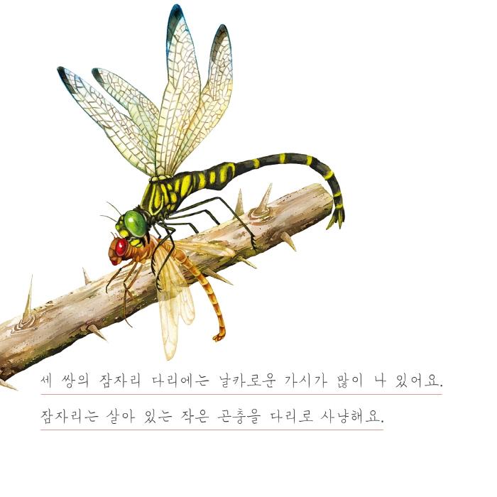 [카드뉴스] 잠자리