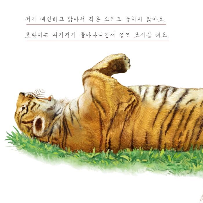 [카드뉴스] 호랑이