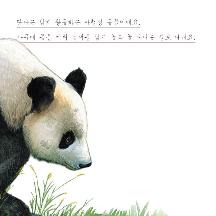[카드뉴스] 곰과 판다