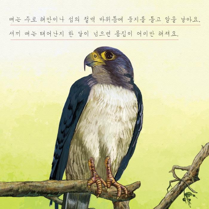 [카드뉴스] 매