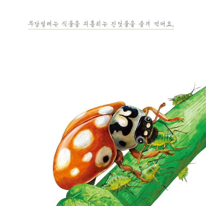 [카드뉴스] 무당벌레