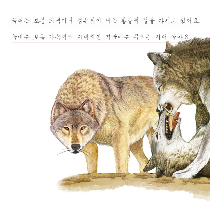 [카드뉴스] 여우와 늑대