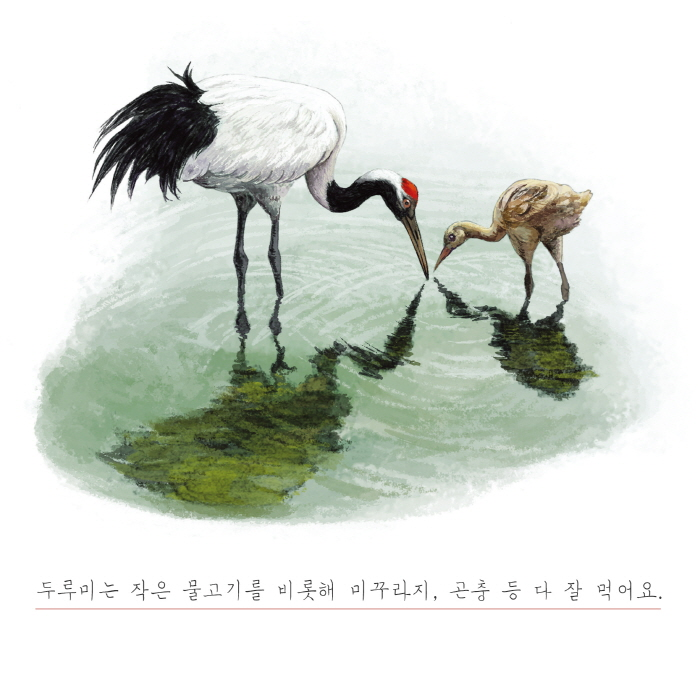 [카드뉴스] 백로와 두루미