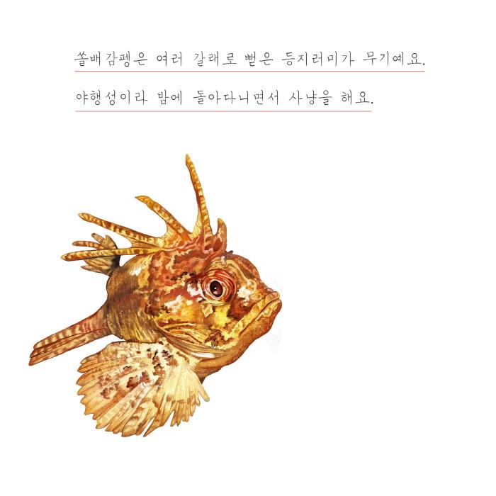 [카드뉴스] 바닷속 생물