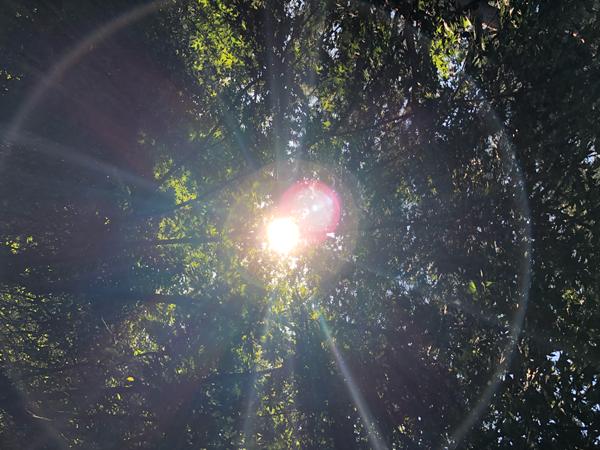 뜨겁게 내리 쬐는 여름 햇볕