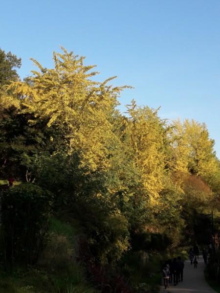 추분, 단풍이 들기 시작하는 가을