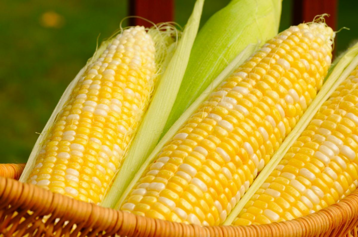 유전자변형(GM) 작물과 식품에 대한 소비자의 반응은 여전히 싸늘한 것으로 나타났다.