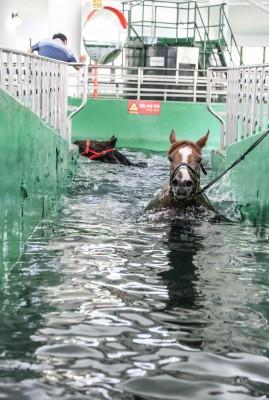 말 수영장