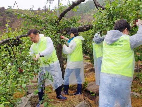 김행춘 부행장(왼쪽 첫번째)과 직원들이 사과 적과작업을 하고 있다.
