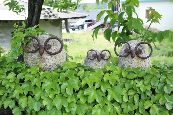 돌담 담쟁이 넝쿨 위에 앉은 부엉이 가족