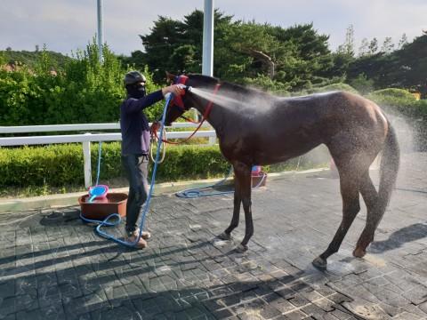 한국마사회, 말들의 여름나기를 위한 체계 완비 나서
