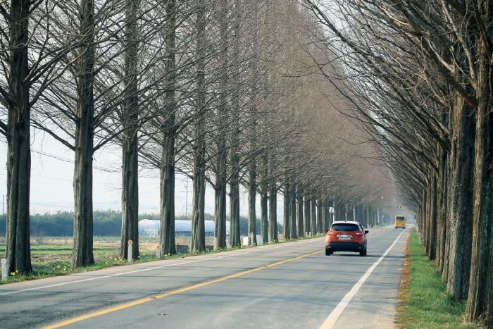 곡성 촬영지 17번 국도 메타세콰이어 도로(제공:News1)