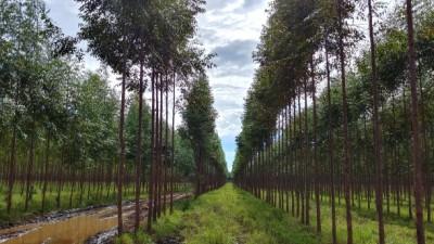 산림청, 해외산림자원 개발사업에 16억 융자 지원