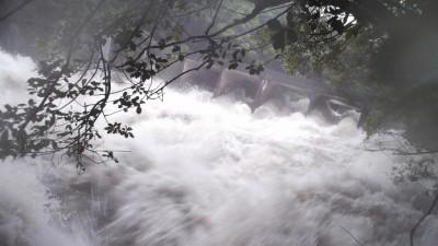 숲토양, 월등한 빗물 흡수 능력으로 홍수 피해 막는다