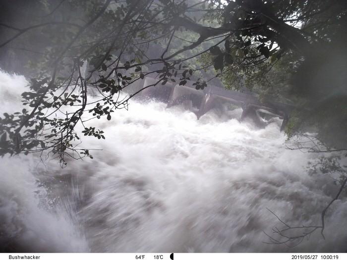 한라산 중산간지역인 서중천의 모습(제공:국립산림과학원)