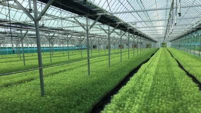 산림청, '양묘시설 현대화 사업' 공모...총 60% 지원금 책정