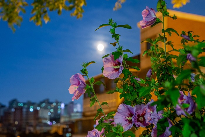 사진부분대상 김영건 '서울밤 그리고 무궁화'(제공:환경부)