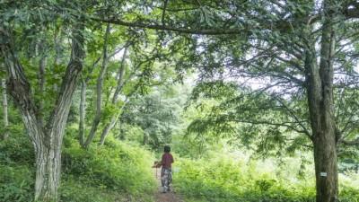 """""""일상에 지친 당신, 숲에서 힐링 하세요""""...국내 숲 여행지 6선"""
