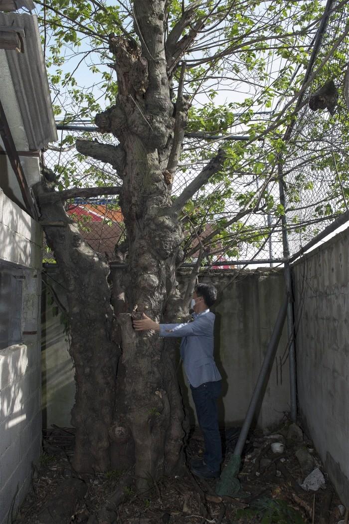 닥나무 전경(제공:국립산림과학원)