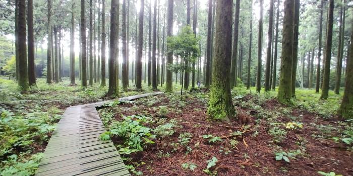 대한민국 명품 숲이 있는 한남연구시험림 내 탐방구간 삼나무전시림(제공:국립산림과학원)