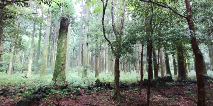 신비스러운 한남 숲(제공:국립산림과학원)