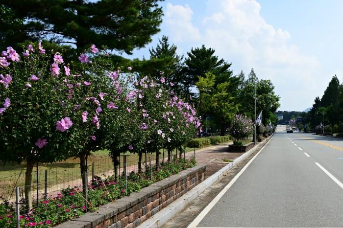 우수상(국립대전현충원), 대전 현충원 가로수(제공:산림청)