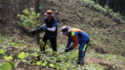 고급 활엽수 용재 생산 위한 '조림기술 자료집' 발간