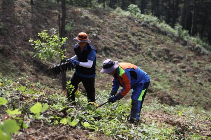활엽수 용기묘 조림(제공:국립산림과학원)