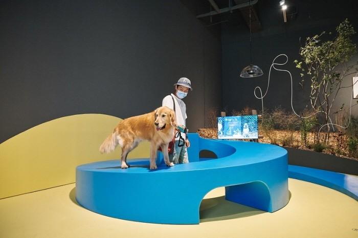 '모두를 위한 미술관, 개를 위한 미술관' 전시 전경(제공:국립현대미술관)