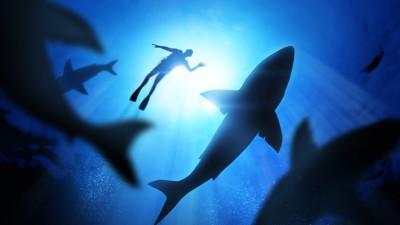 """""""코로나 백신 원료 가진 상어가 위험하다"""""""
