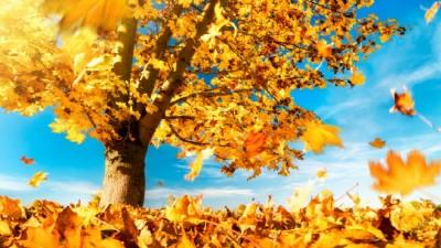 """""""가을 단풍 여행, 비대면으로 떠나요"""""""