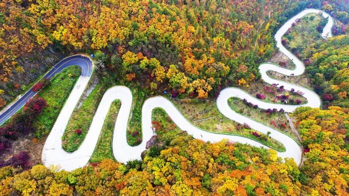 속리산 말티재 명품숲 가을단풍(제공:산림청)