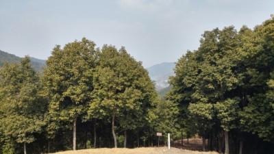상록성 참나무류 육성 위해 우량 개체 선발기법 개발