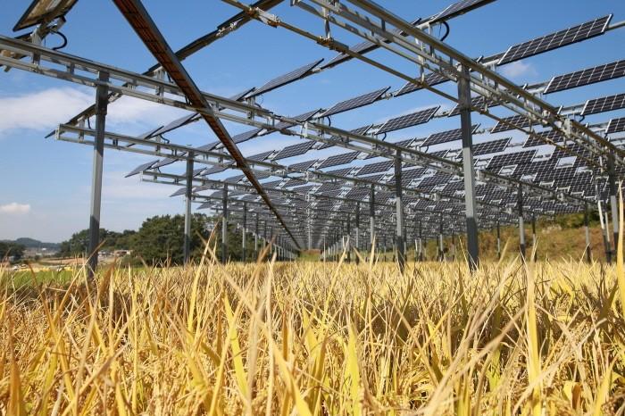 영농형태양광 발전소(제공:한화큐셀)