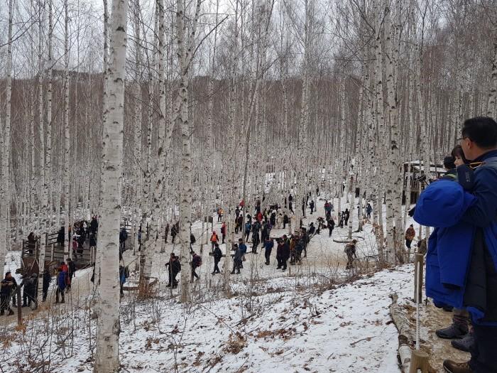 겨울 인제 자작나무 숲을 즐기는 관광객들(제공:국립산림과학원)