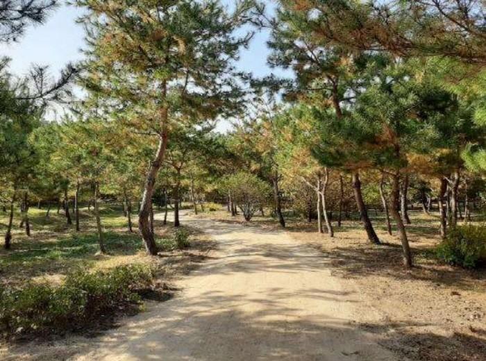 서울 의릉 '소나무 산책길'(제공:문화재청)