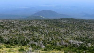 국립산림과학원, 멸종위기 구상나무 보전 위한 심포지엄 개최