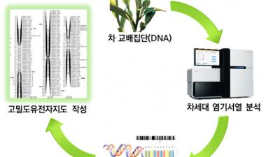 차(茶) 육종 기간 줄일 수 있는 '유전자지도' 완성