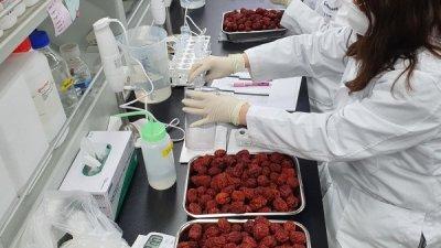 수입 '냉동 대추' 품목분류 기준 마련한다