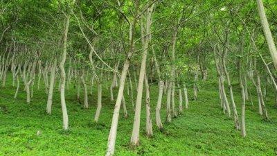 수백 년 산다는 푸조나무, 매력도 다양해