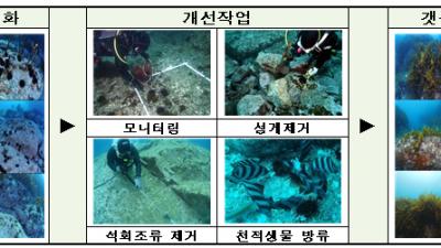청정해역 독도 해양생태계 지키기, 올해도 계속된다